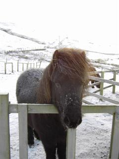 Snowy Lancer